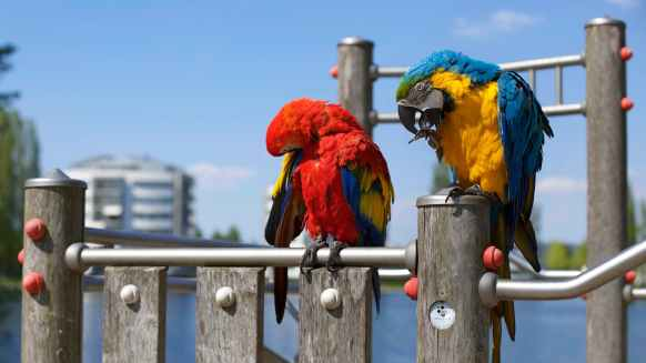 red blue animals colourful