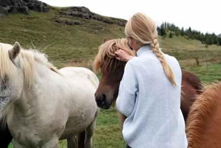 agriculture animals care cavalry