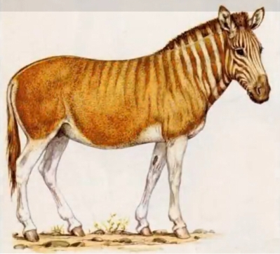 Image result for hagerman horse