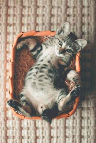 photo of tabby kitten lying on orange basket