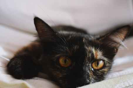 selected focus photo of black kitten leaning on white mattress