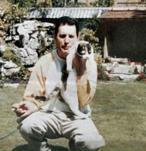 freddie-mercury-with-cats-28108552700447780027.jpg