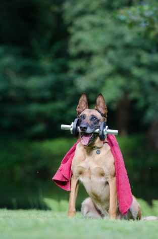 fitness trick dog trick malinois